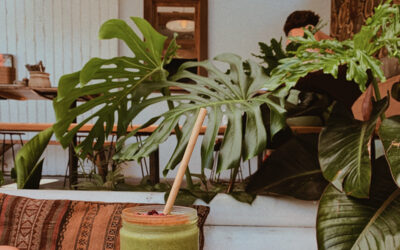 BEST SELF-HELP GUIDE to Byron Bay Accomodation and Activities